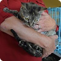Adopt A Pet :: Hazel - Surrey, BC
