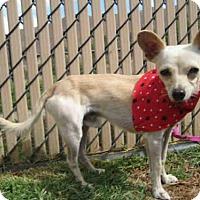 Adopt A Pet :: *MIGUEL - Norco, CA