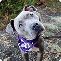 Adopt A Pet :: Kasey - Wilmington, DE