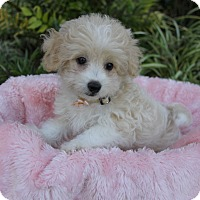 Adopt A Pet :: JESSICA - Newport Beach, CA