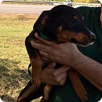 Adopt A Pet :: Sinatra - Harmony, Glocester, RI