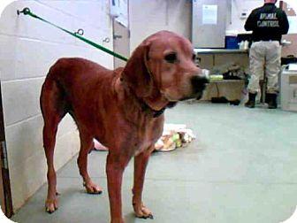 Labrador Retriever Mix Dog for adoption in Conroe, Texas - BOBBY