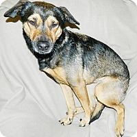 Adopt A Pet :: Skye - Umatilla, FL