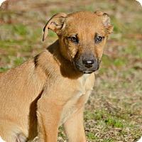 Adopt A Pet :: Tang - Glastonbury, CT