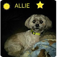 Adopt A Pet :: Allie - Rockford, IL