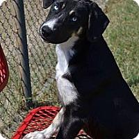 Adopt A Pet :: Jordan! - Hancock, MI