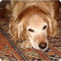 Adopt A Pet :: Ashley - Denver, CO