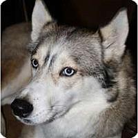 Adopt A Pet :: Lady - Huntington Station, NY