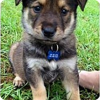 Adopt A Pet :: Fig - Richmond, VA