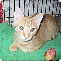 Adopt A Pet :: Anthony - Colmar, PA