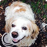 Adopt A Pet :: winnie - Wanaque, NJ