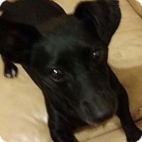 Adopt A Pet :: PITU - Dix Hills, NY