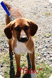 Hound (Unknown Type) Mix Puppy for adoption in Davis, Oklahoma - Benjamin OKs31