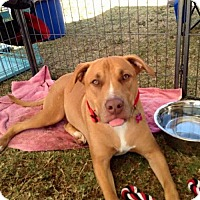 Adopt A Pet :: Hailey - Phoenix, AZ
