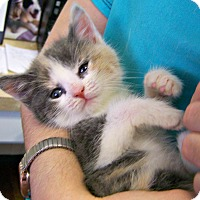 Adopt A Pet :: Sedona - Toledo, OH