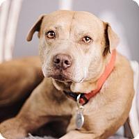 Adopt A Pet :: Peach - Portland, OR