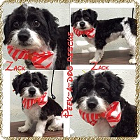 Adopt A Pet :: Zack - South Gate, CA