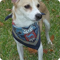 Adopt A Pet :: Trevor - McKinney, TX