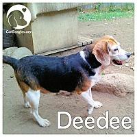 Adopt A Pet :: Deedee - Novi, MI