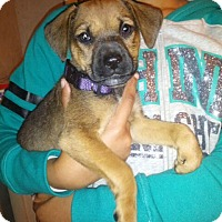 Adopt A Pet :: Cider - Carteret/Eatontown, NJ