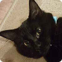 Adopt A Pet :: Cookie - Loveland, CO