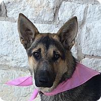 Adopt A Pet :: Gina - Dripping Springs, TX