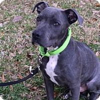Adopt A Pet :: Monty - Houston, TX