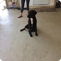 Adopt A Pet :: Rosie - Hohenwald, TN