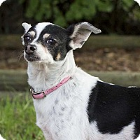 Adopt A Pet :: Lilly - Livonia, MI