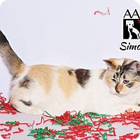 Adopt A Pet :: Simone - Tomball, TX