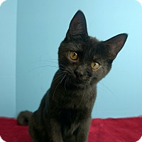 Adopt A Pet :: Jefferson - Columbia, IL