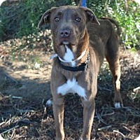 Adopt A Pet :: Coco - Sacramento, CA