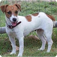 Adopt A Pet :: BETSY ROSS - Phoenix, AZ