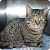 Adopt A Pet :: Joey - Colmar, PA