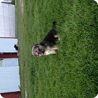Adopt A Pet :: Molly - Palmyra, WI