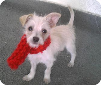 Small To Medium Dogs For Adoption Los Angeles