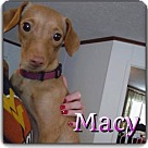 Adopt A Pet :: Macy