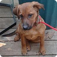 Adopt A Pet :: Reba Rogers - Staunton, VA
