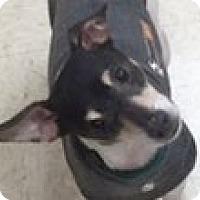 Adopt A Pet :: Brownie - Woodstock, IL