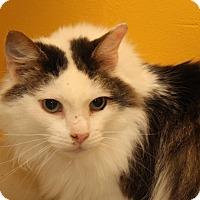Adopt A Pet :: Preston (Neutered) - Marietta, OH
