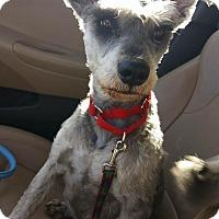 Adopt A Pet :: Judy - Phoenix, AZ