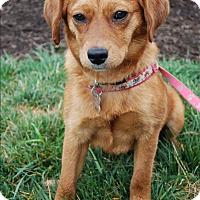 Adopt A Pet :: Gina - Richmond, VA