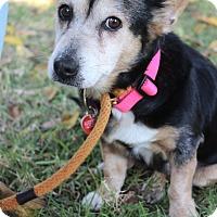 Adopt A Pet :: Tabatha - Los Angeles, CA