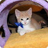 Adopt A Pet :: Sneezy - Richmond, VA