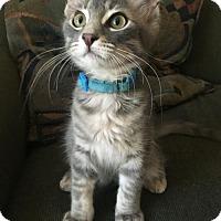Adopt A Pet :: Theon - Hurst, TX