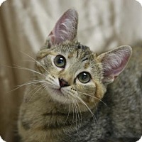 Adopt A Pet :: Mary Wolf - Kettering, OH