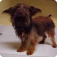 Adopt A Pet :: Mason - 9 lbs - Dahlgren, VA