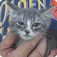 Adopt A Pet :: Otis - Germantown, MD