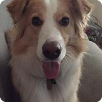 Adopt A Pet :: Annie - Doylestown, PA