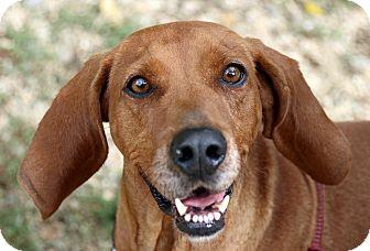 Coonhound Mix Dog for adoption in Breinigsville, Pennsylvania - Ruby